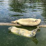 Hollywood-elokuvasta tutussa Varsovan eläintarhassa viihtyy koko päivän - katso kuvat ja video!