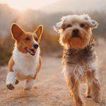 Erinomaista kansainvälistä koirien päivää! Muistatko nämä kuuluisat hauvat?