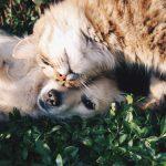 Haemme Oholle eläinystävää tekemään eläinaiheista ohjelmaa!