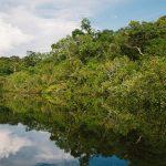 Amazonin sademetsä kärsii tuhoisista maastopaloista