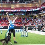 Koirien Agility: leikkiä vai oikeaa urheilua?