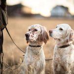 Vinkkejä syksyn metsälenkeille koiran kanssa