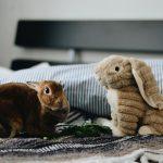 Kanit ja jyrsijät lemmikkinä - näin pidät huolta pienistä häkkieläimistä