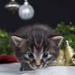 Kissat ja kynttilät – voiko kissataloudessa polttaa kynttilöitä turvallisesti?