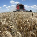 Syyria saa 5000 tonnia viljaa Venäjän Krimiltä