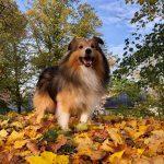 Vuoden 2020 Hyvän mielen lähettilääksi Seppo-koira