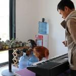 VIDEO! Tuleeko tästä kanasta kuuluisa pianisti?