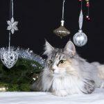 5 joulun vaaraa kissoille