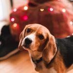Koiralle sopimattomat jouluruoat