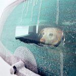 Älä jätä koiraa yksin autoon pakkasella