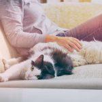 Lemmikki on tutkitusti hyväksi henkiselle hyvinvoinnille