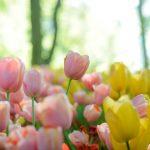 Mitä kaikkea keväinen viikonloppu kätki sisälleen - huomasitko nämä uutiset?