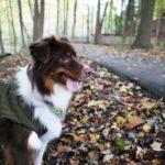 Heijastin voi pelastaa koiran hengen