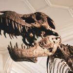 Nyt voit omistaa ihka oikean T. rexin - katso video!