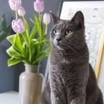 Kissalle myrkylliset huonekasvit ja kukat – näitä ei kannata ostaa kissatalouteen