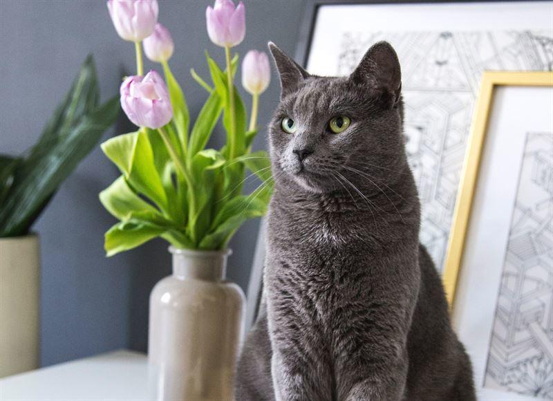 Myrkylliset Huonekasvit Kissoille