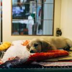 Korona-aika näkyy lemmikkieläinvakuutusten määrässä - yhä useampi kissa tai koira käy etälääkärin vastaanotolla