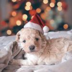 Vinkit pennun enimmäiseen jouluun – uusi perheenjäsen tarvitsee joulurauhaa