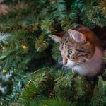 Kissatalouteen turvallinen joulukuusi