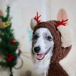 Miten muistaa lemmikkiä jouluna? Kurkkaa Mustin ja Mirrin suosituimmat lahjat