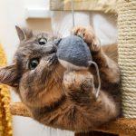 Kissan ylipainon riskit & 3 vinkkiä kissan painonhallintaan