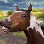 Hevosalan SomeGaala on vihdoin täällä – seuraa livelähetystä kello 15:00 alkaen