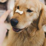 Ystävänpäivä lemmikin kanssa yhdessä herkutellen – katso vinkit terveelliseen tarjoiluehdotukseen
