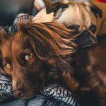 Koronapandemia lisäsi eläinsuojeluvalvonnan tarvetta
