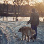 Heikot jäät ovat riski myös koirille – toimi näin, jos koira juoksee jäille tai tippuu jäihin