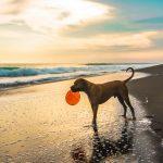 Hellesään vinkit koirille ja koiranomistajille
