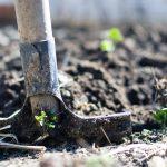 Viisi vinkkiä kotipuutarhurille – näin saat pihan kukoistamaan